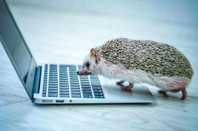 ノートパソコンとハリネズミ